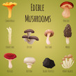 Edible mushroom - 77891566