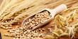 Leinwanddruck Bild - Getreide Körner
