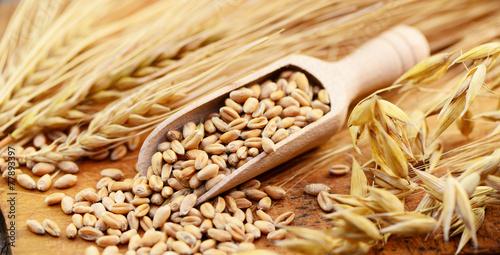 Getreide Körner - 77893397