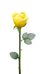fresh yellow flower