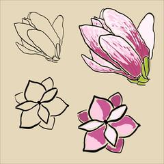 Set of magnolia flowers
