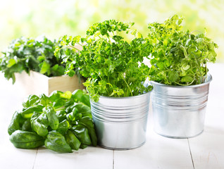 fresh green herbs