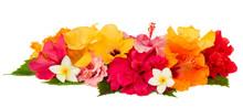 """Постер, картина, фотообои """"border of colorful hibiscus flowers"""""""