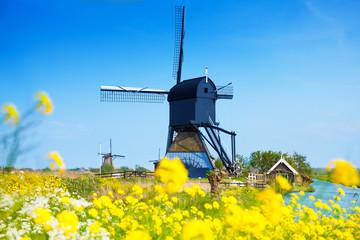 Kinderdijk, Netherlands at spring with flowers