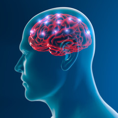 Cervello neuroni sinapsi