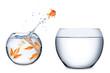 fish teamwork concept