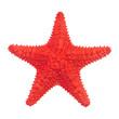 Leinwandbild Motiv Caribbean starfish isolated on white background.