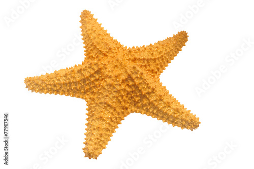 Caribbean starfish isolated on white background. - 77907546