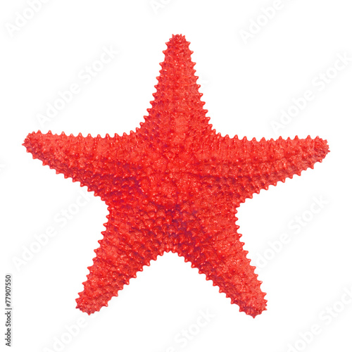 Caribbean starfish isolated on white background. - 77907550