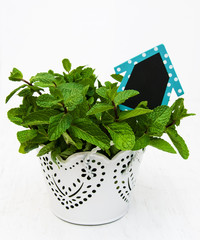 Mint in a white pot
