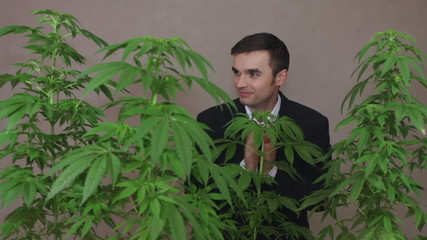 Happy business man with Marijuana plants