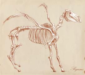 An hand drawn vector, converted: Pegasus