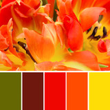 Colour swatches and orange tulips - 77912743
