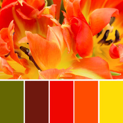 Colour swatches and orange tulips