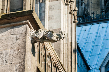 Gargoyl at top of the cathedral in Cologne