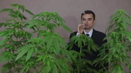 Businessman with Cannabis plants smoking Marijuana joint.