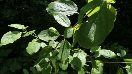 Pflanzen im Wald 01