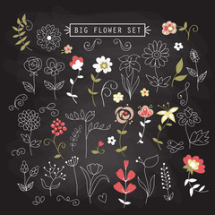 Set of hand drawing flowers and elements for design on chalkboar