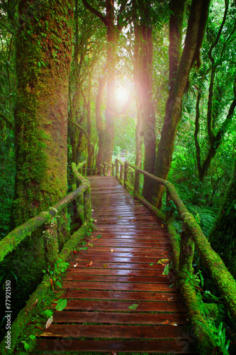 wood ways in mountain rain forest Doi Inthanont National Park Ch - 77921510