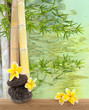frangipanier sur galets, bambous et reflets aquatiques