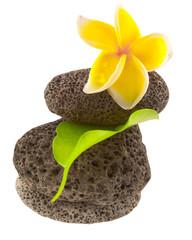 fleur de frangipanier sur galets superposés, ficus
