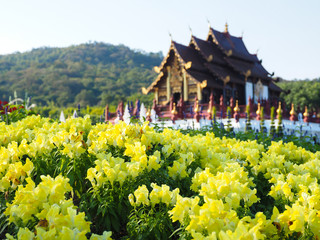 YELLOW FLOWERS IN FRONT OF A PALACE