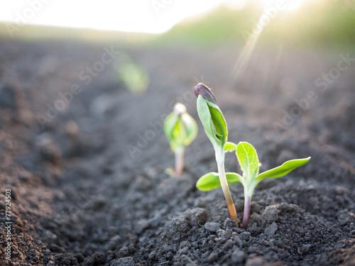 Staande foto Lente seedling