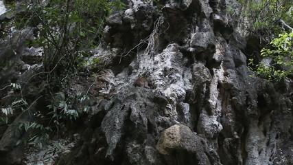 monkeys sit on dark whimsical fantastic cliff in thailand