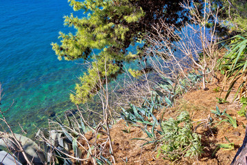 Mediterranean plants by the sea