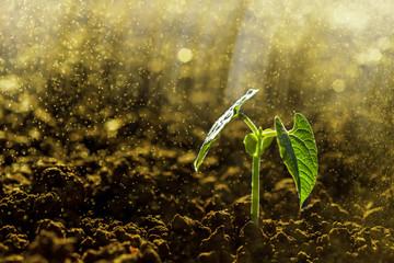 Green seedling