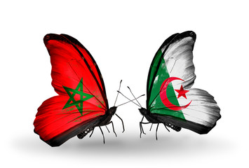 Two butterflies with flags Morocco and Algeria