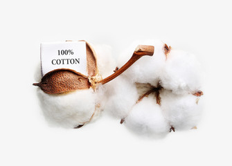 Cotton plant flower