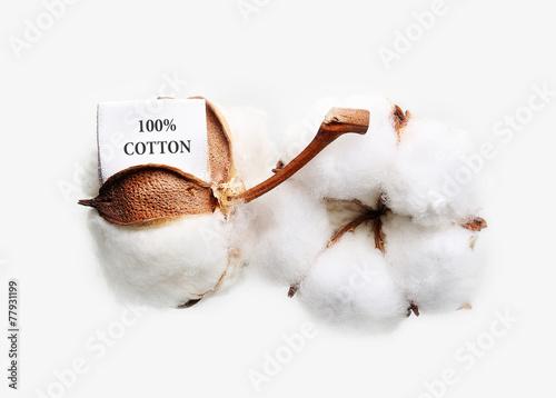 Fotobehang Planten Cotton plant flower