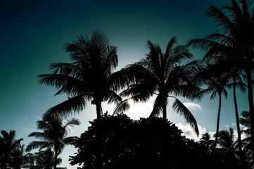 Florida moments