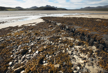 Scottish landscape with seaweed and sand. Highlands. Scotland