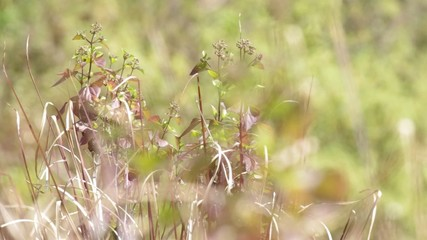 Wild weed and grass shoot moving with the wind