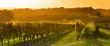 Leinwanddruck Bild - Vineyard Sunrise - Bordeaux Vineyard