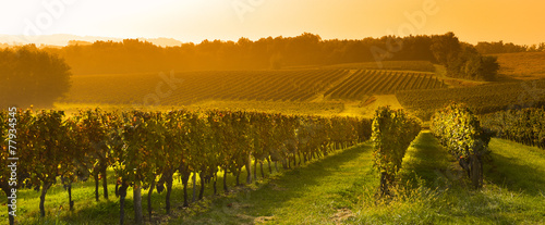 Fotobehang Platteland Vineyard Sunrise - Bordeaux Vineyard