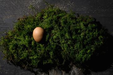 Osternest, Osterei auf Moos