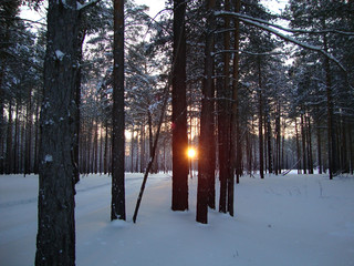the sun shines through the winter forest
