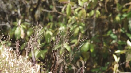 Wild grass moving with the wind
