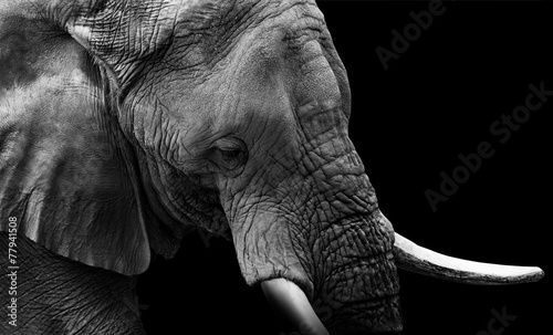 Fotobehang Olifant Elephant Close Up Low Key
