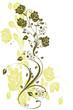 floral verte