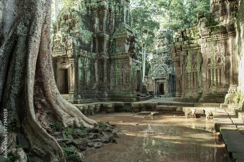 The ruins of Ta Prom Temple, Siem Reap, Cambodia. - 77944559
