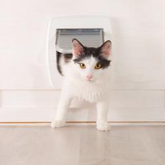 Cat passing through the cat door
