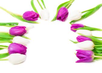 Tulpen, Halbkreis, Grußkarte