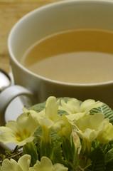 Primula vulgaris Primeln 앵초속 Первоцвет زهرة الربيع