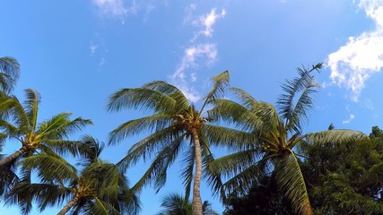 cuconut palms moving in windy weather, clouds and blue sky