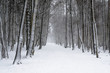 Leinwanddruck Bild - Snow covered tree trunks. Winter alley