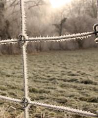 Frostiger Zaun am Morgen